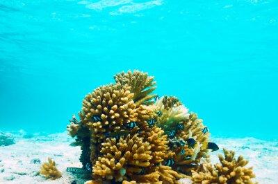 Naklejka Rafa koralowa na Malediwach