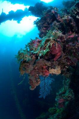 Naklejka Rafa koralowa w świetle dziennym. To zdjęcie zostało zrobione podczas wreckdiving w Mikronezji. Właściwie jest to wrak statku, który r underwate forr 60 lat.