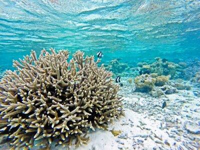 Naklejka Rafa koralowa z ryb