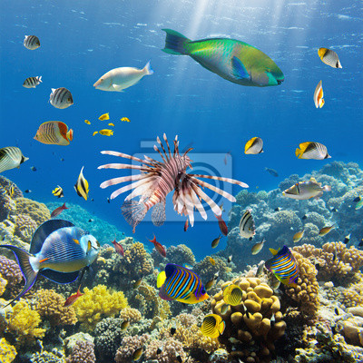 Naklejka rafy i ryby