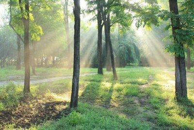 Naklejka Rano sunlight