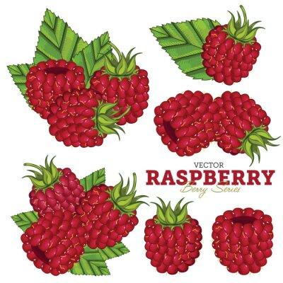 Naklejka Raspberry Zestaw wektorowych.