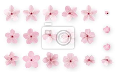 Naklejka Realistic sakura or cherry blossom; Japanese Spring Flower Sakura; Pink Cherry Flower.