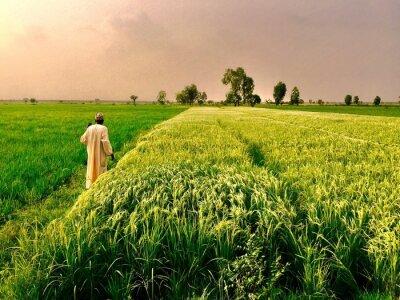 Naklejka Rear View Of Man Standing In Farm