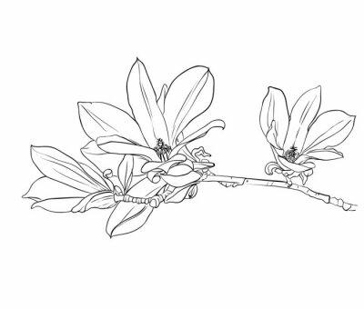 Naklejka Ręcznie rysowane kwiaty magnolii.