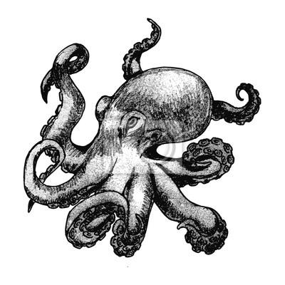 Ręcznie rysowane Ośmiornica samodzielnie na białym tle.