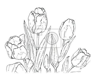 Naklejka ręcznie rysowane tulipany graficzny kwiat na białym tle