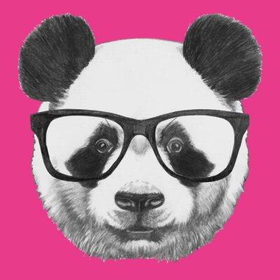 Naklejka Ręcznie rysowany portret Panda z okularami. Vector pojedyncze elementy.