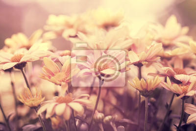 Red rocznika tło kwiat o wschodzie słońca