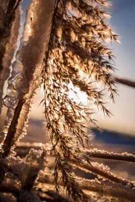 Reed lodem