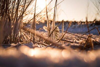 Reed Pejzaż zimowy z lodem