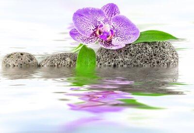 Naklejka reflets d'orchidée et bambou sur galets
