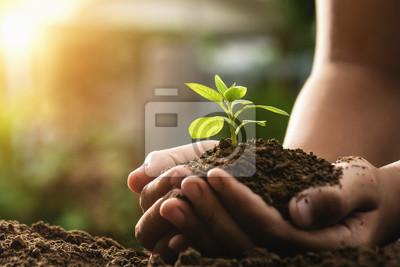 Naklejka ręka trzyma uprawy roślin i zachód słońca. koncepcja eko i zielony świat