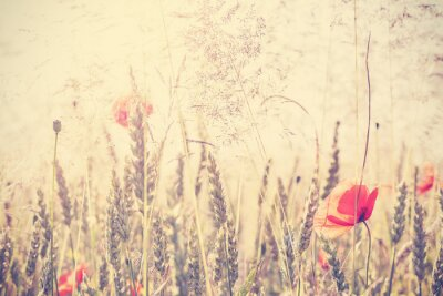 Naklejka Retro filtrowane dziką łąkę z kwiatów maku na wschód słońca