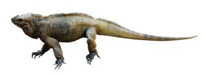 Naklejka Rhinoceros Iguana