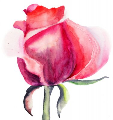 Naklejka Rose Flower