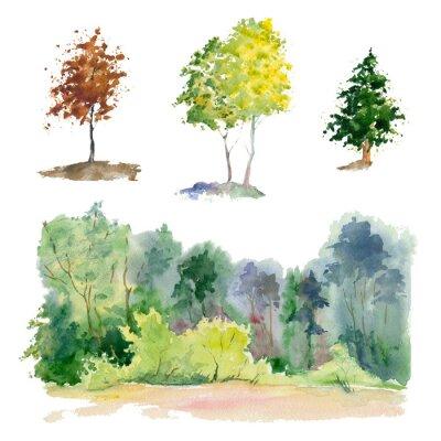 Naklejka Rośliny akwarelowe (las, Gaj, drzewo).