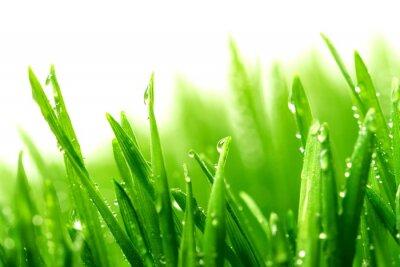 Naklejka Rosy na świeżej zielonej trawie