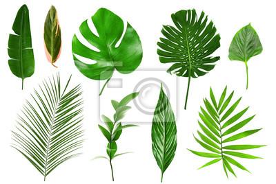 Naklejka Różne tropikalnych liści na białym tle