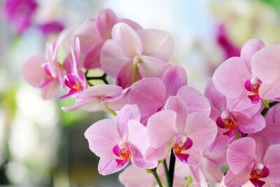 Naklejka różowa orchidea
