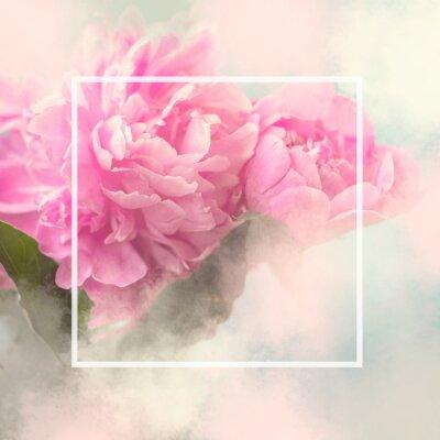 Naklejka Różowa piwonia kwiaty kwadratowa karta podarunkowa z białą ramką i kopia przestrzeń; kwiatowy tło