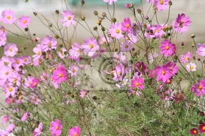 Różowe i fioletowe kwiaty