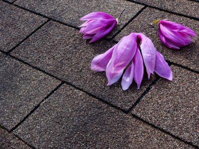 Naklejka Różowe i fioletowe kwiaty magnolii na gonty asfaltowe dachu