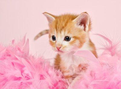Naklejka Różowe pióra otaczających Ginder kociaka