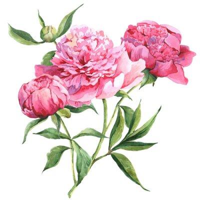 Naklejka Różowe piwonie botaniczne Akwarele ilustracji