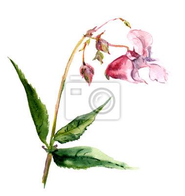 Różowy kwiat izolować balsam akwarela