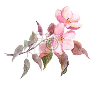 Różowy kwiat jabłoń.