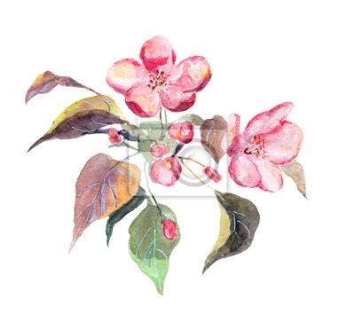 Różowy kwiat jabłoń. Akwarele ręcznie malowane obraz
