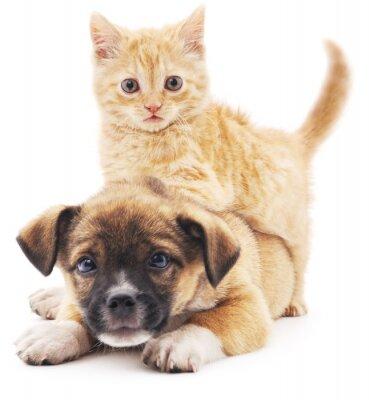 Naklejka Rred kotka szczeniaka.
