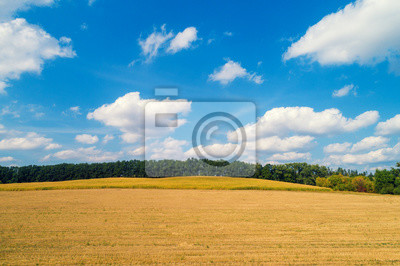 Rural landscape. Wheat field with a beautiful blue cloudy sky