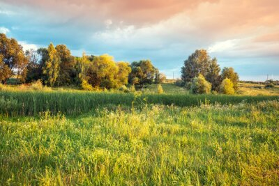 Rural landscape with the beautiful evening sky. Green meadow in summer