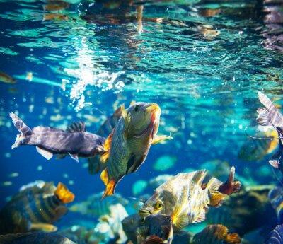 Naklejka Ryba pod wodą