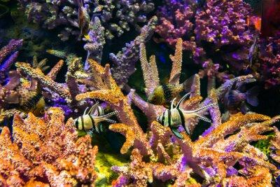 Naklejka Ryby morskie i rafy