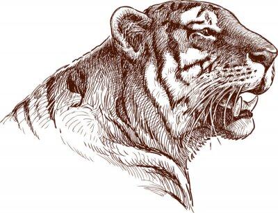 Naklejka ryk tygrysa