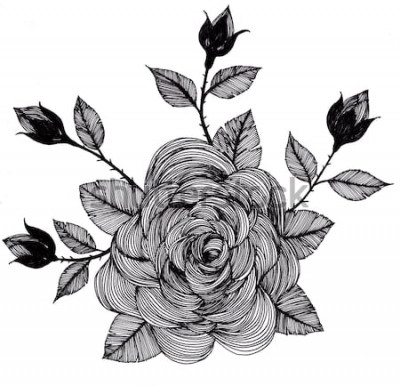 Naklejka rysunek odręczny róża