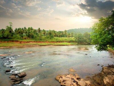 Naklejka Rzeka w dżungli
