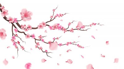 Naklejka Sakura blossom branch. Falling petals, flowers. Isolated flying realistic japanese pink cherry or apricot floral elements fall down vector background. Cherry blossom branch, flower petal illustration