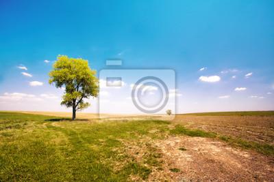 Samodzielnie drzewa w polu nieużytków