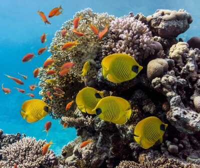 Naklejka Scena Coral - panorama