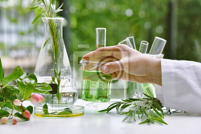 Naklejka Scientist with natural drug research, Natural organic and scientific extraction in glassware, Alternative green herb medicine, Natural skin care beauty products, Laboratory and development concept.