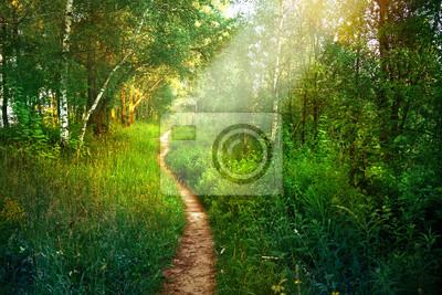 Naklejka Ścieżka ścieżka w las liściasty wiosną w lecie w porannym słońcu. Młode zielonych drzew w lesie.