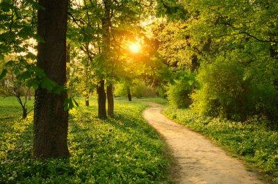 Naklejka Ścieżka w parku