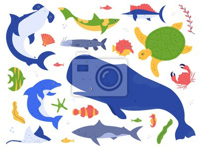 Sea animals species. Ocean animals in their natural habitat. Cute whale, dolphin, shark and turtle vector illustration set. Undersea world pack. Water plants, seaweed hammer fish isolated on white