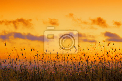 Seashore with tall dry grass at sunset. Golden sunset over sea. Grass against dramatic evening sky. Nature background