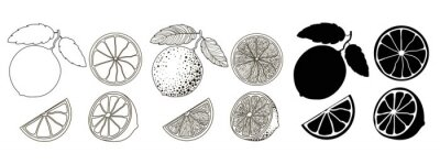 Naklejka Set of 4 citrus fruits in outline style, doodle and black silhouette. One citrus on a branch with two leaves, half and two wedges isolated on a white background. Stock vector illustration.
