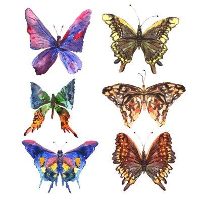 Naklejka Set of beautiful abstract colorful summer watercolor butterflies